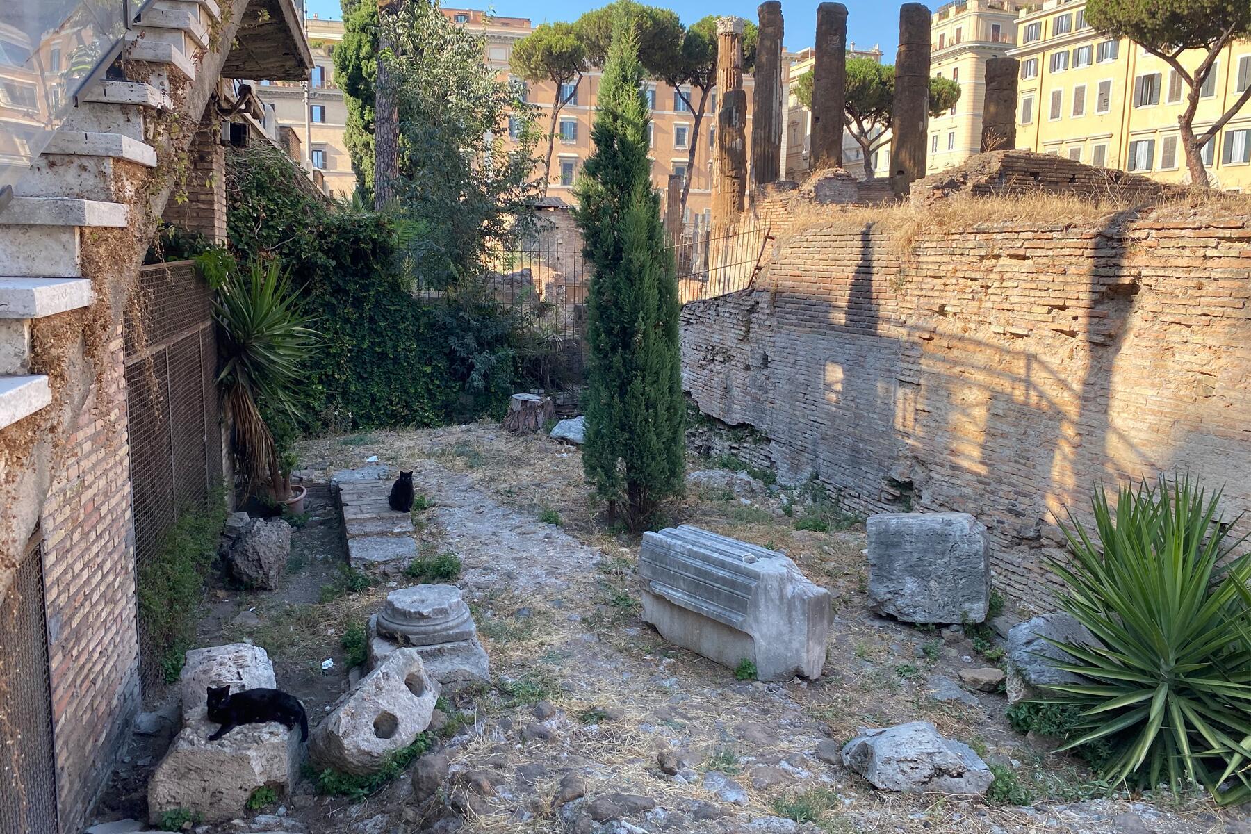 Cat Ladies of Rome