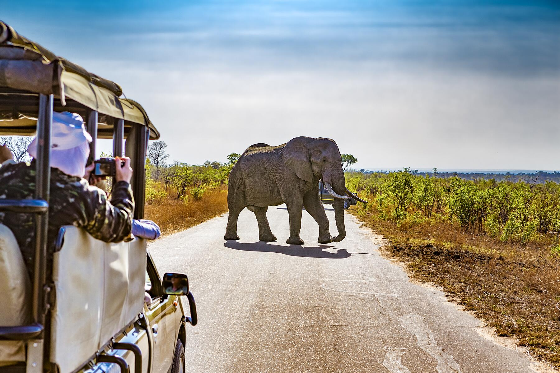 How Safaris Have Transformed From Game Hunts to Conservation-Based Vacations