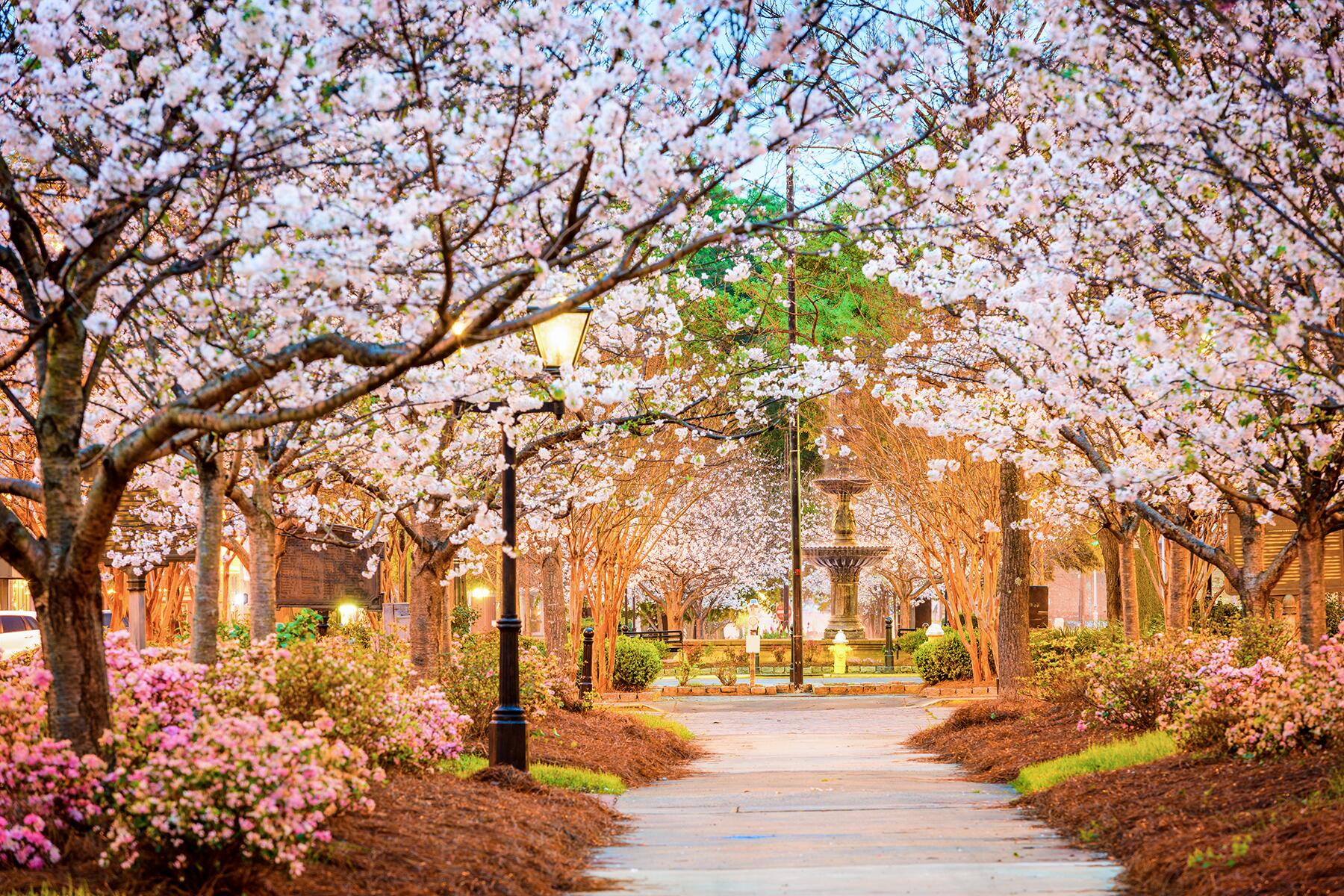 One of the World's Best Cherry Blossom Festivals Is in This Small U.S. Town
